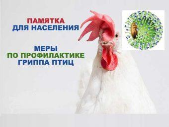 Внимание! Грипп птиц